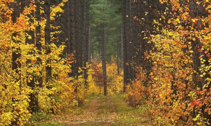 Download nature autumn forest road trees landscape 2k 4k - 10k wallpaper nature ...