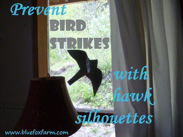 Best Bird Strike Ideas On Pinterest Ile Of Man Happy - Window decals to prevent bird strikes