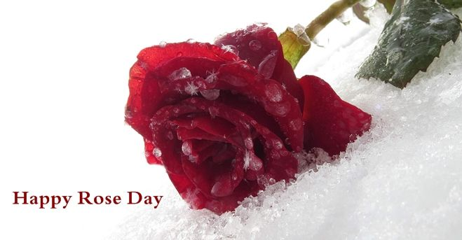 Best 7th Feb Rose Day Sms, Rose Day Shayari in Hindi, Rose Day Msg For girlfriend/boyfriend