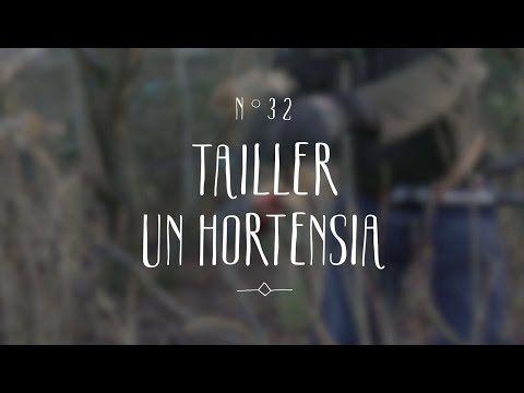 Tailler un hortensia - YouTube