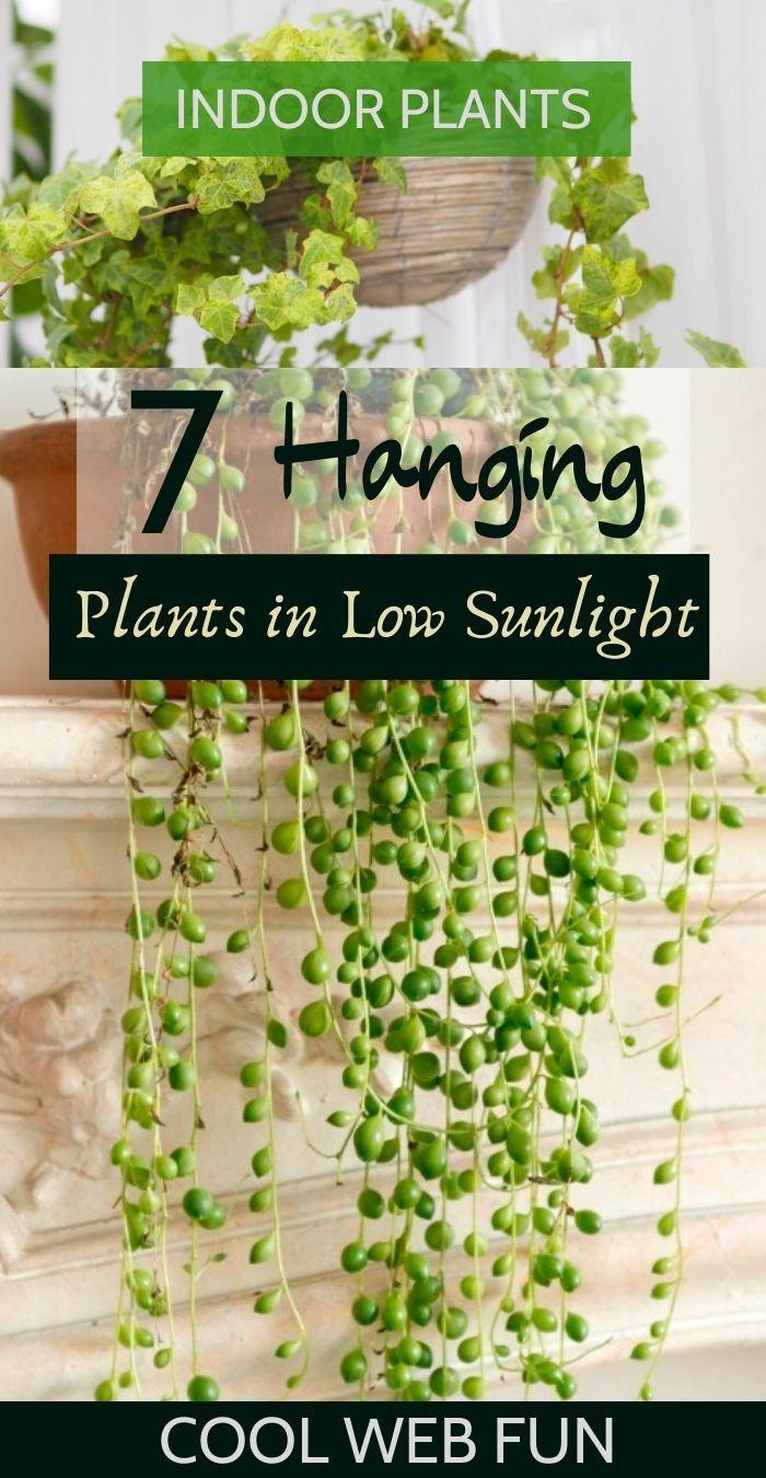 7 Best Indoor Hanging Plants With Low Maintenance In 2020 Best