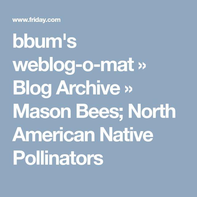 bbum's weblog-o-mat » Blog Archive » Mason Bees; North American Native Pollinators