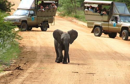 Baby elephant at Kruger Park