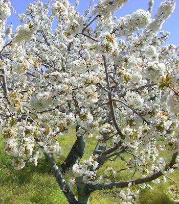 ¿Por qué es importante tener árboles y arbustos en el jardín?  #RefugiosWN de #fauna y #flora https://refugios.wnature.org/