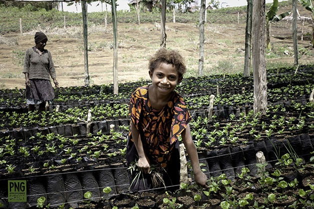 young girl working family coffee nursery jiwaka province highlands pngdirect.com