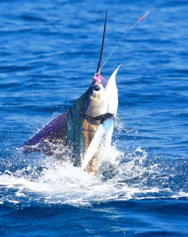 67 best images about florida fishing on pinterest red for Bay area fishing
