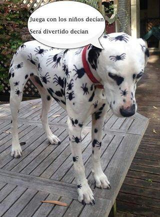 Este perrito merece un premio!