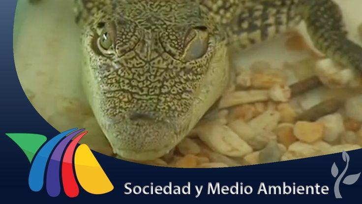 4 de octubre: Día Mundial de los Animales | Noticias de Chihuahua