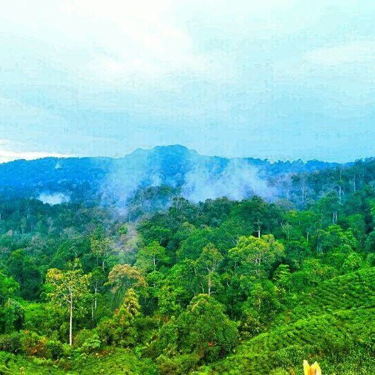 Indonesian tropical forests