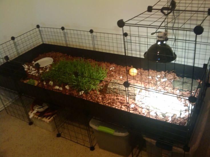 tortoise box   Tortoise Enclosure [In Progress] - Tortoise Forum - Tortoise Husbandry ...