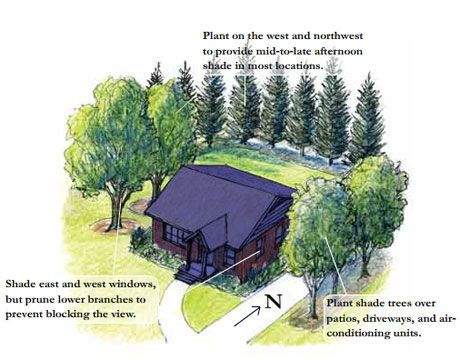 Landscaping Tip: Plant a deciduous tree on the southwest corner of the house.  A deciduous tree in this position will provide solar gain in the winter and shade in the summer.  ~from ecological geographer and author Robert G. Bailey, Ph.D. Photo: www.thedailygreen.com