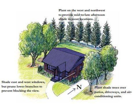 TreeFolks NeighborWoods program - promotes urban shade tree planting - Awesome!