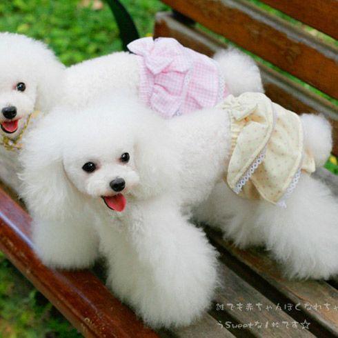 Женский собаки физиологического подхода гигиены здоровый 100% хлопок шорты кружева плиссированные юбки плед печать стиль симпатичные с бантом галстуки нижнее белье