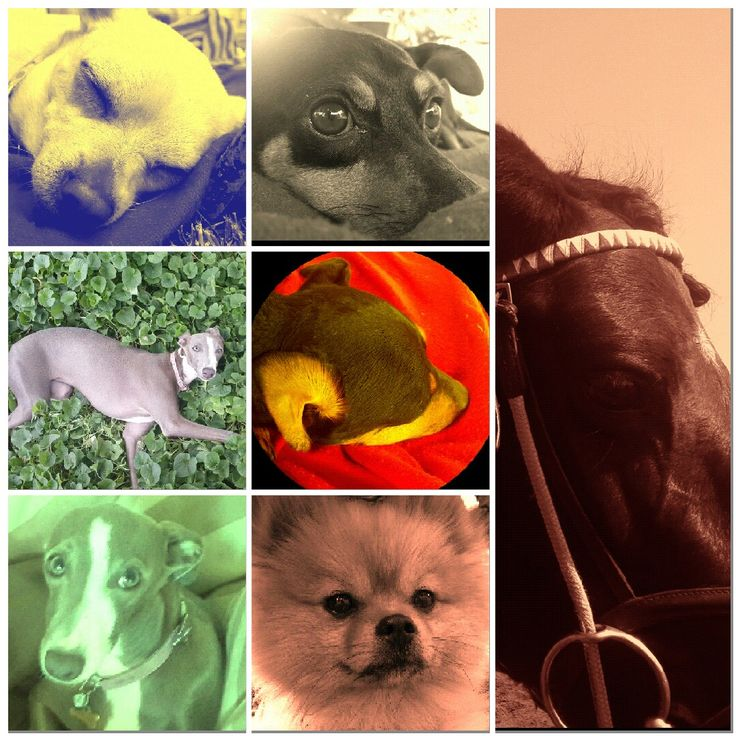 4 dogs and a horse (Instagram page). Akilah the youngest!