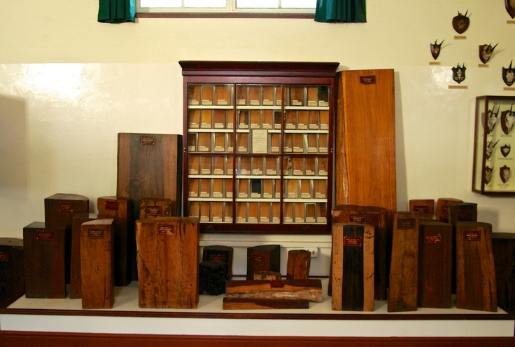 Types of wood from the Albany Museum, Grahamstown, South Africa. Ben Coode-Adams