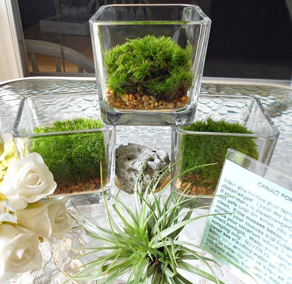 Easy, cheap, innovative looking! Seems to match the brand to me!--possibly for cubicles in front entrance    3 Moss Terrariums,  Great For Home, Office, Dorm, or Wedding Table Decorations. $25.00, via Etsy.
