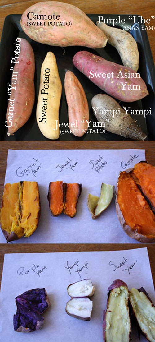 FOOD TIPS :: Sweet Potato vs. Yam--The definitive guide! Including taste tests, recipes, results and more!