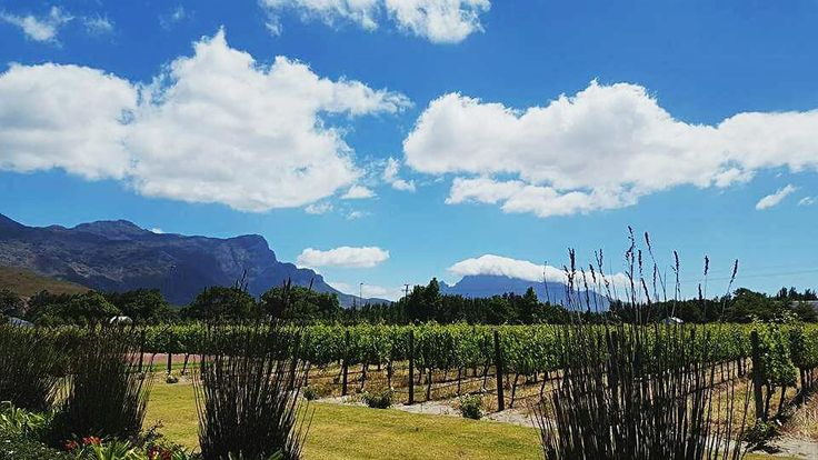 Beautiful afternoon at Leopard's Leap Vineyard in Franschhoek South Africa.  #franschhoek #southafrica #leopardsleap #vineyard #winefarm #beautiful #leopardsleapVineyard #sky#beautiful#scenery#wine#drinks#southafricanwine#winetasting#love#a4z#clouds#bluesky#travel#traveller#globetrotter#travelsouthafrica#visitsouthafrica#traveltravel