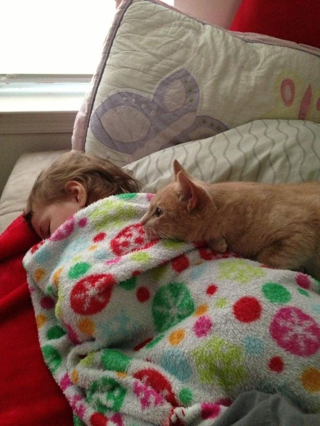 How to help someone who's sick. | 38 Pictures That Prove Cats Have Hearts Of Gold