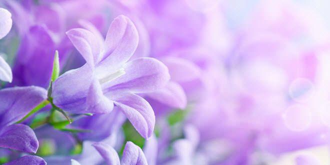 15 de las flores mas hermosas del mundo