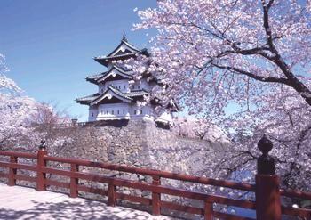 Сакура у восточного дома