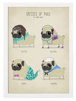 http://room99.se/tavlor-posters/posters/vintage/poster-species-of-pugs/