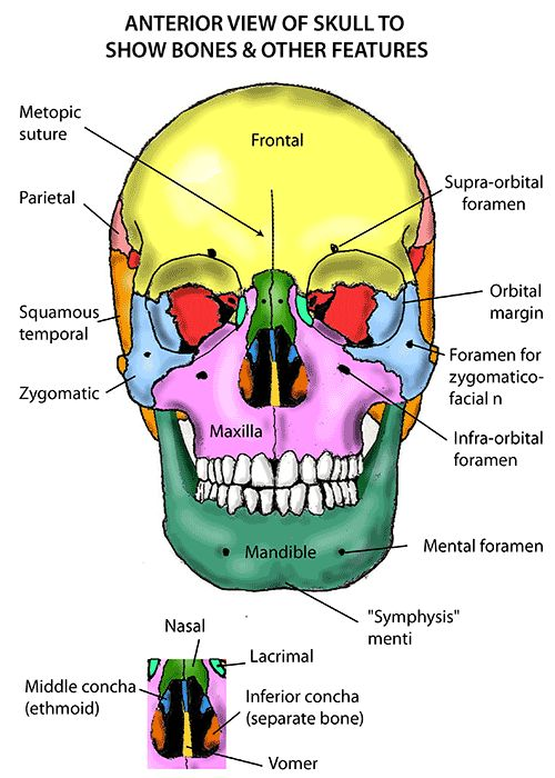 27 best orlcards images on Pinterest | Health, Anatomy and Dental ...