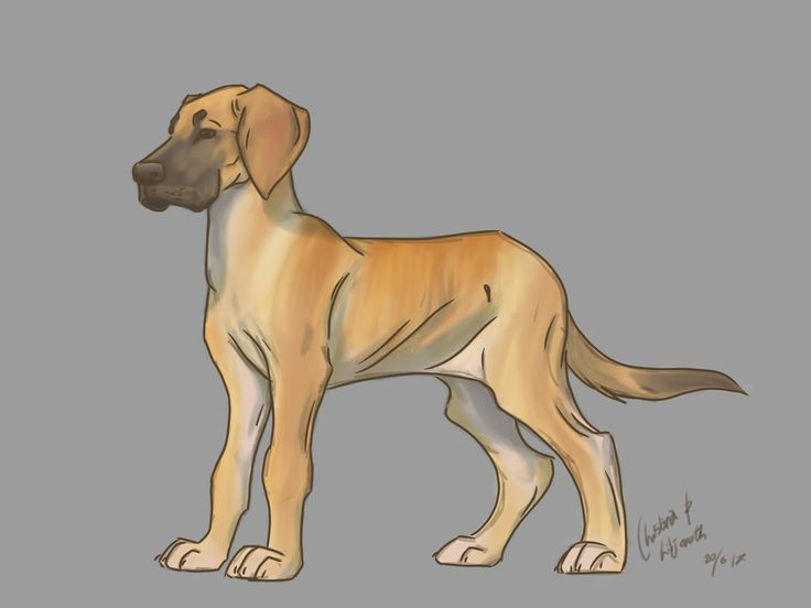Great dane puppy; drawings by ArtWolf