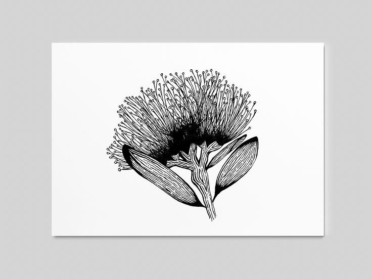 Pohutukawa Woodcut Sketches / Drawings