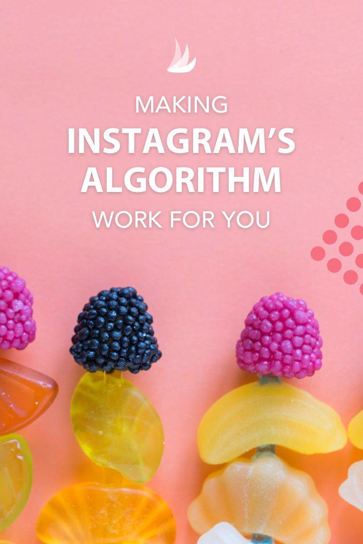 Making Instagram's Algorithm Work for You