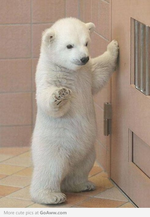 """""""hey whats up...no im not trying to break out...just chillin by this here door...ya know......."""" lol"""