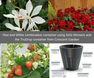 Container Gardening with AAS Winners - All-America Selections