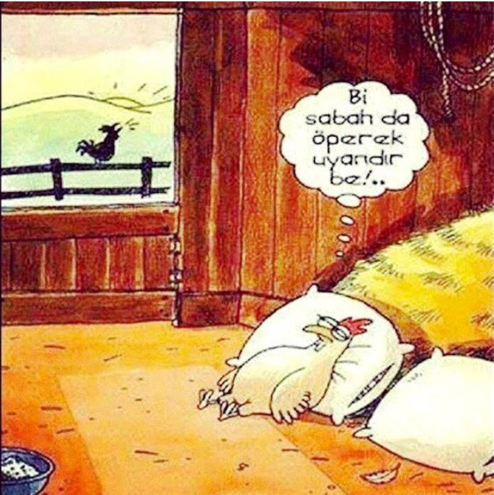 Uyandıran Horoz... #komik #karikatür #karikatur #enkomikkarikatür #enkomikkarikatur #karikaturcu #karikatürcü #funny #comics #karikaturdunyasi #karikaturvemizah #mizah #gunler #days
