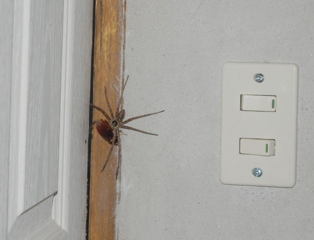 17 best images about pest control on pinterest german for How to get rid of spiders in house