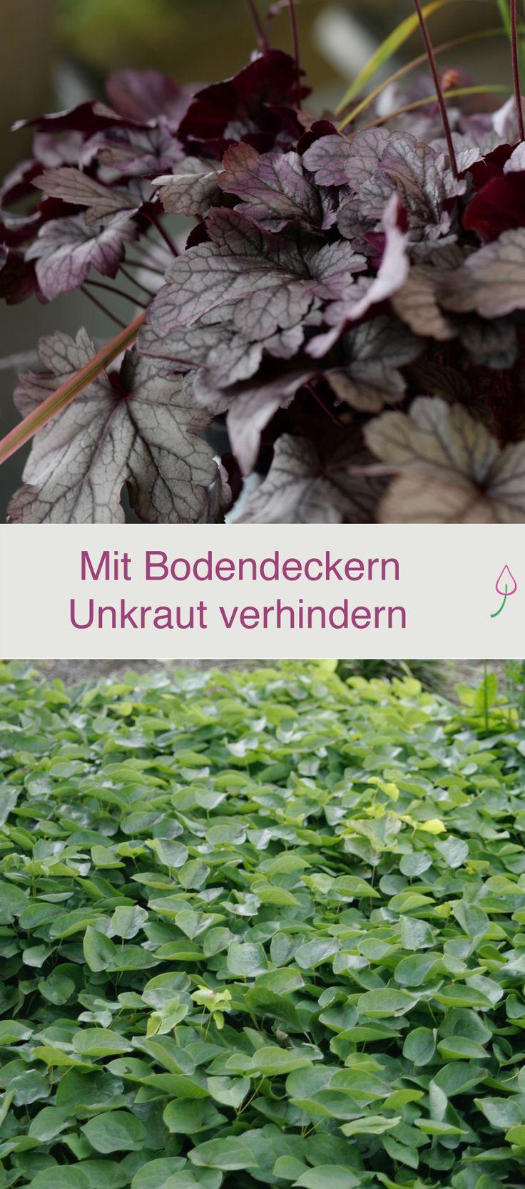 Bodendecker pflanzen statt Unkraut jäten. #Garten #garden #Pflanzen
