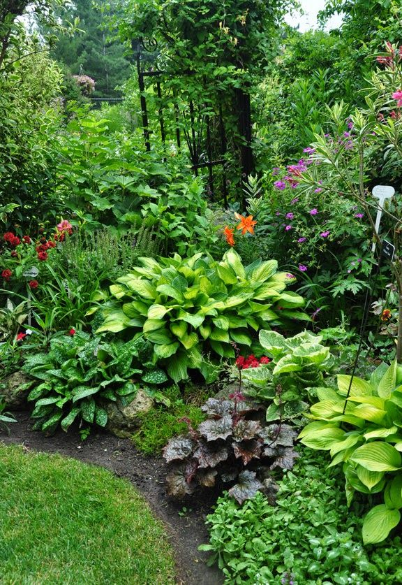 Shade garden plants - A mix of perennials including several hosta, a Brunnera, a Heuchera and a Pulmonaria. threedogsinagarden.blogspot.com
