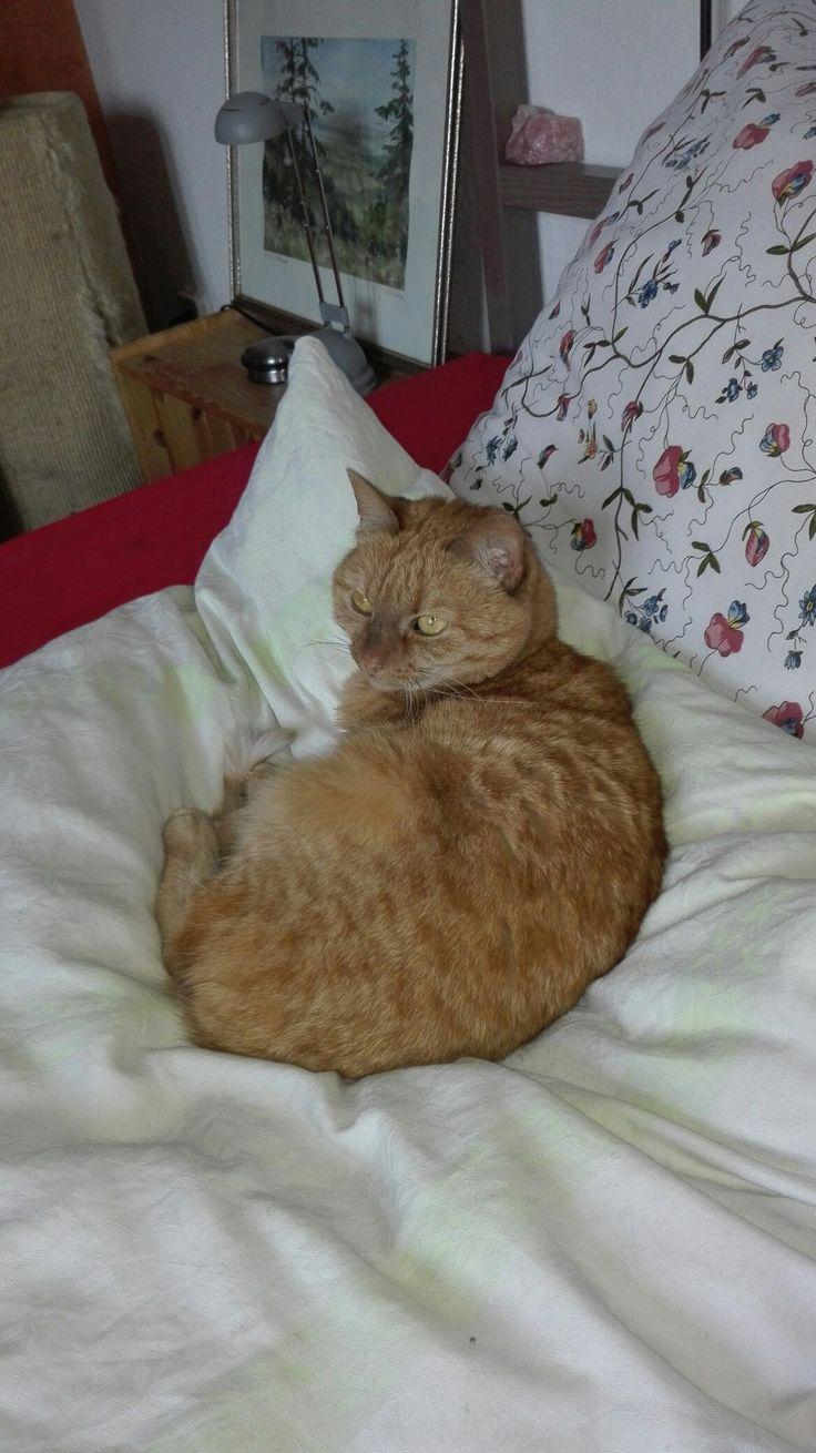Die besten 25+ Rote katze Ideen auf Pinterest | niedliche Kätzchen ...