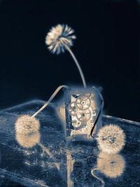 Tick Tock Dandelion Clock
