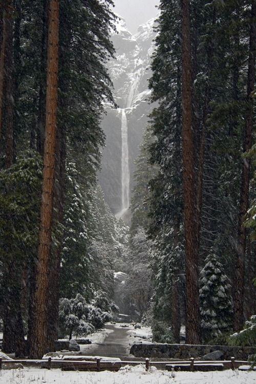 Yosemite Falls, Ca: Forests, Yosemite Fall, Lower Fall, Buckets Lists, Winter Wonderland, Yosemite California, Trees, National Parks, Mothers Natural
