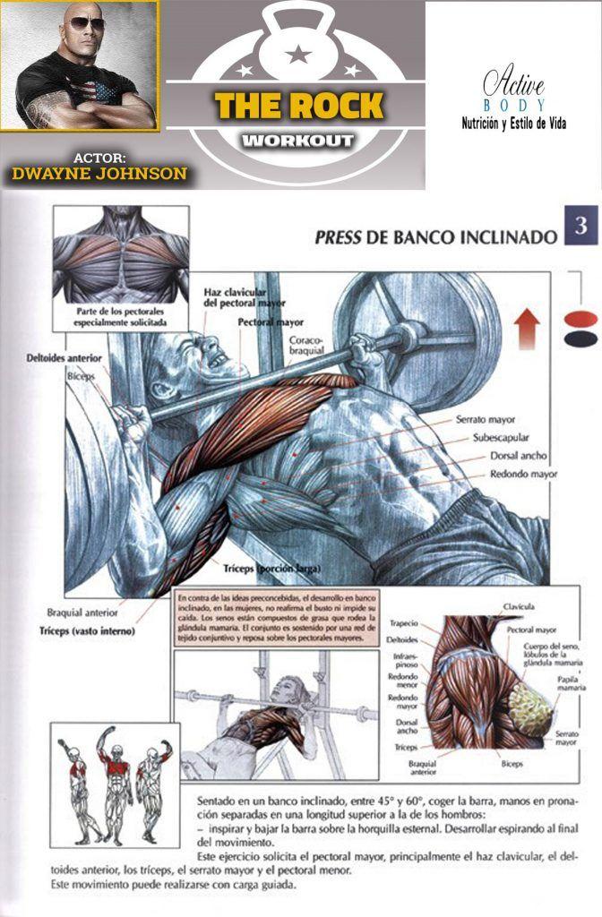 entrenamiento pecho y biceps en casa