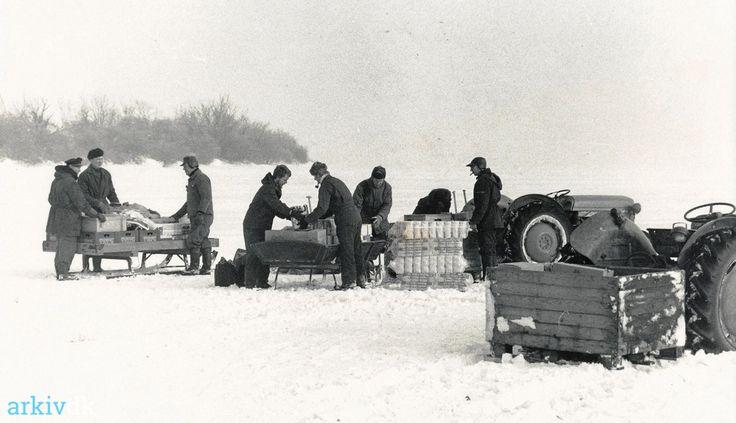 arkiv.dk   Askø - varetransport under vinterkrigen