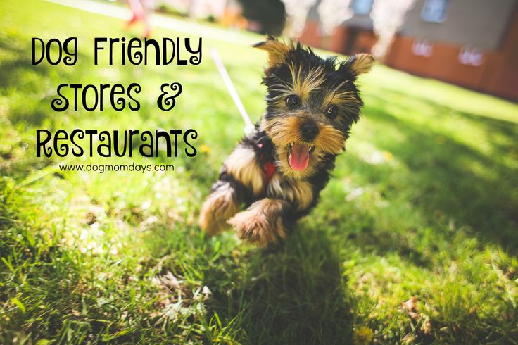 Want to take your dog with you on fun outings? Here's a list of dog friendly stores, restaurants and drive thrus!  Dog Mom | Dog Friendly | Traveling With Dogs | Dog Friendly Stores | Dog Friendly Restaurants |