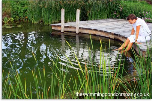 Convert a swimming pool into a swimming pond the swimming for Pool to koi pond conversion