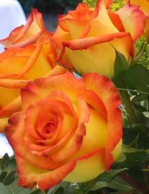 Yellow roses, Beautiful roses and Orange on Pinterest