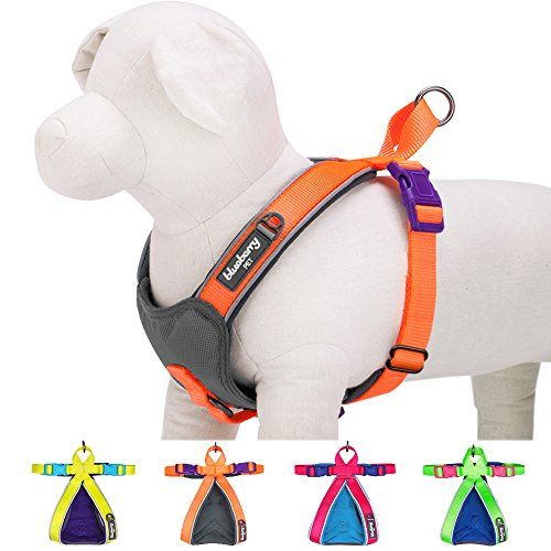 """Best price on Blueberry Pet New Summer Hope 3M reflective M/M 20.5"""" Neck* 24-29.5"""" Chest Fluorescent Orange Adjustable No Pull Ultra-soft Neoprene Padded Dog Harness Vest //   See details here: http://healthlypetshub.com/product/blueberry-pet-new-summer-hope-3m-reflective-mm-20-5-neck-24-29-5-chest-fluorescent-orange-adjustable-no-pull-ultra-soft-neoprene-padded-dog-harness-vest/ //  Truly a bargain for the inexpensive Blueberry Pet New Summer Hope 3M reflective M/M 20.5"""" Neck* 24-29.5""""…"""