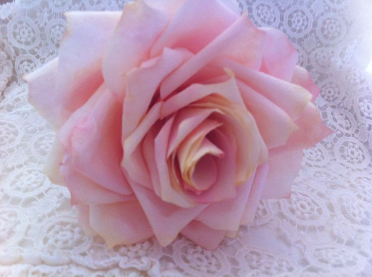 coffee filter rose