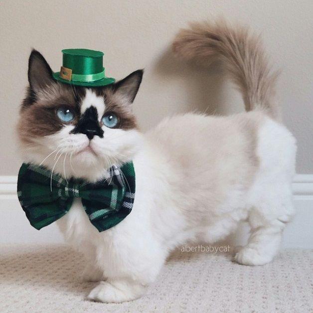 Die Instagram-Katze hat gerade einen weiteren Stern gewonnen – und dies ist …   – FOR CATS