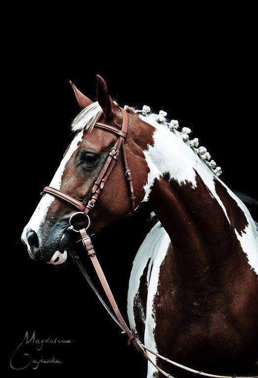 Paint Horse--Beautiful !