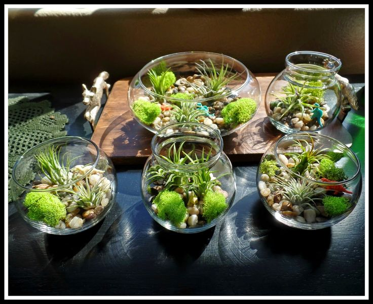 April 39 S Homemaking Easy Air Plant Terrariums Projects