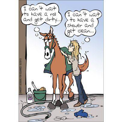 Horse grooming comic